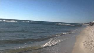 Panama City Beach shark feeding frenzy 11/22/2015