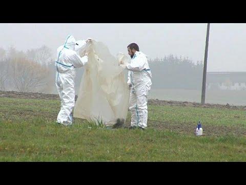 Hohes Risiko für Schweinepest-Ausbruch in Deutschland