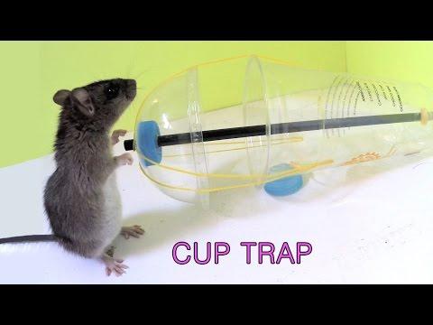 Disposable Cup Mouse Rat/Trap - Thời lượng: 5 phút, 45 giây.