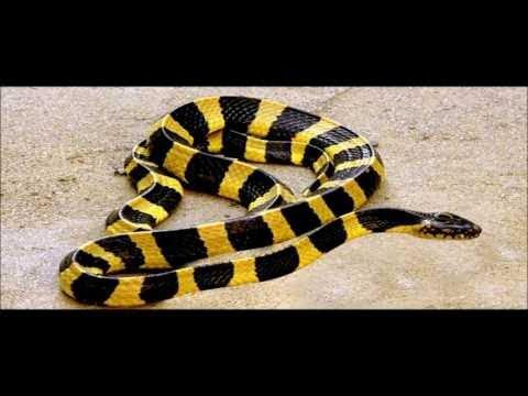 The Reptiles of the Desert | Unseen Videos of Monitor Lizard, Snake, Cobra | AR Entertainments