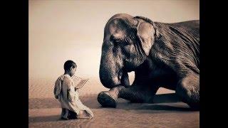 Video Rachel Yamagata - Elephants (lyrics) MP3, 3GP, MP4, WEBM, AVI, FLV Juli 2018