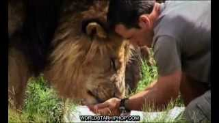 Kevin Richardson the Lion Whisperer - Dangerous Companions
