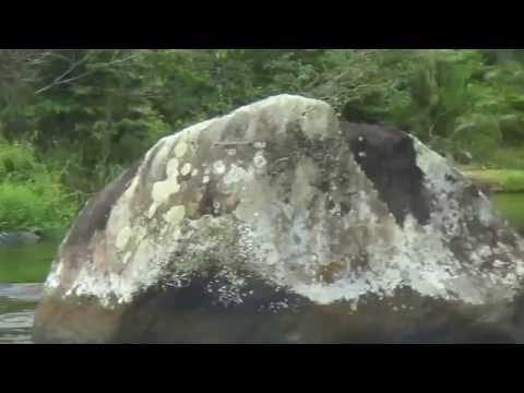 o nosso rio gomguji dario meira