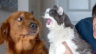 Video If you want to LAUGH HARD, WATCH FUNNY ANIMALS - Funny ANIMAL compilation MP3, 3GP, MP4, WEBM, AVI, FLV Mei 2017