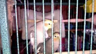 Настроение у попугая заметно поднялось