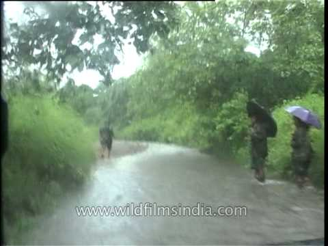 Driving Through The Dense Forest Of Kaziranga On A Rainy Day