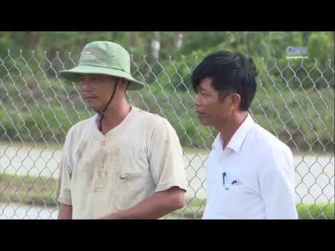 Phát triển nuôi cá nước ngọt theo hướng thâm canh