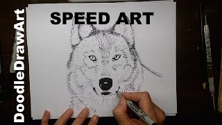 How To Draw A Wolf Face - Speed Art - Timelapse - Step By Step Tutorial Also Available