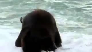 Video Elefante mergulha em Aver-o-Mar Póvoa de Varzim MP3, 3GP, MP4, WEBM, AVI, FLV Desember 2017