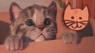Fun Kitten Care - Little Kitten My Favorite Cat - Play Fun Cute Pet Care Animation Game For Children