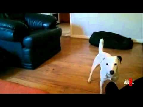 狗狗跌倒姿勢超豪邁,我不爭氣的笑了…