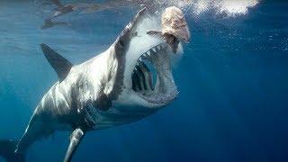 Download Lagu Okyanusların En Büyüğü MEGALODON Köpek Balığı Mp3