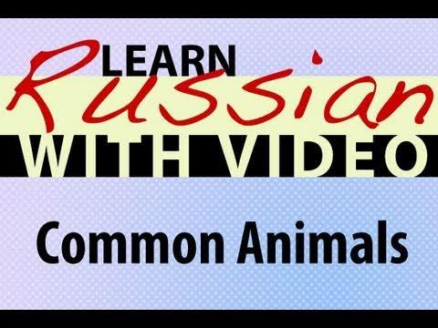 Russisch lernen mit Video - Common Tiere