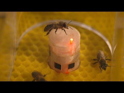 Ρομπότ επικοινωνούν με μέλισσες και ελέγχουν τη συμπεριφορά τους…