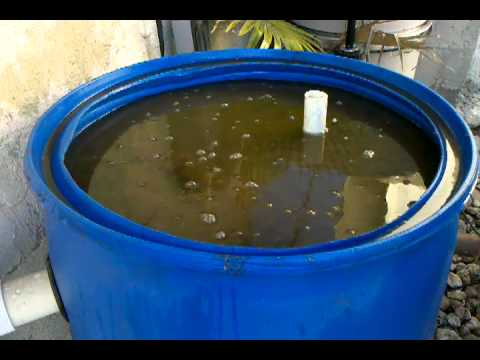 How to make a biofilter for aquaponics details easy for Homemade biofilter for duck pond