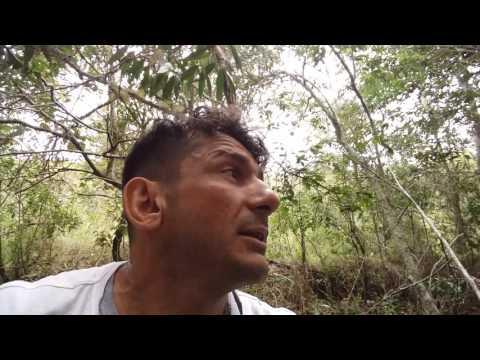 Exploração Orquidofila em Carbonita MG