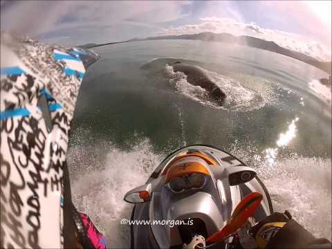 Vídeo extraordinário mostra momento em que piloto de jet ski bate em baleia jubarte