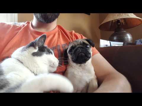 il-gatto-geloso-del-carlino