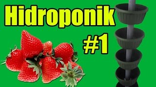 Клубника на балконе #1(Strawberry on the balcony#1)