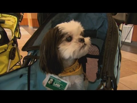 Animal Therapy for Cancer Patients