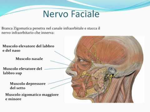 salute - il nervo trigemino