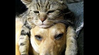 Top 10 Cats Who Don't Care That Their Pillows Are Actually Dogs by Did You Know Animals?
