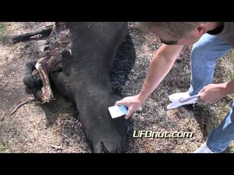 UFOnut.com - Episode 009: Sanchez Cattle Mutilation 2011