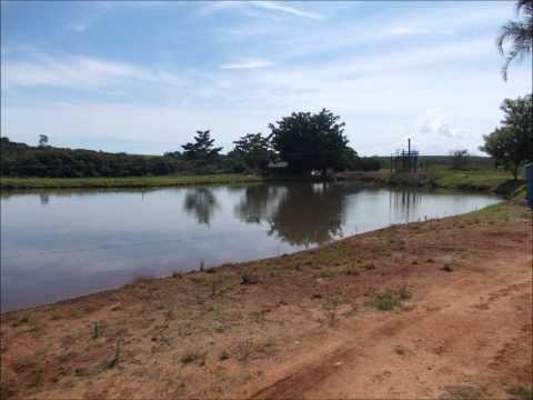 Pesqueiro Caminho das Águas - Dourado São Paulo