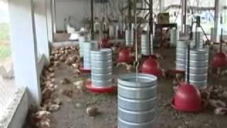 Programa de Avicultura Familiar