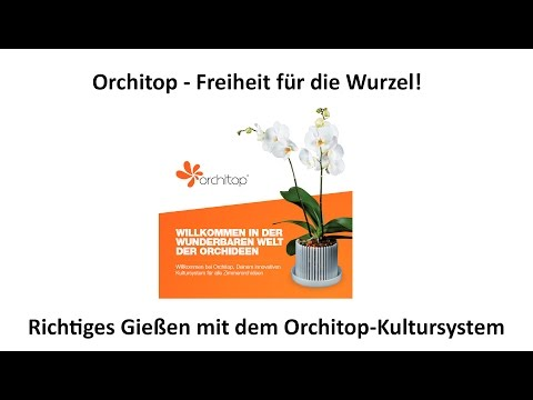 Orchideen Pflege: Orchitop - Orchideen richtig gießen im Orchitop-Kultursystem