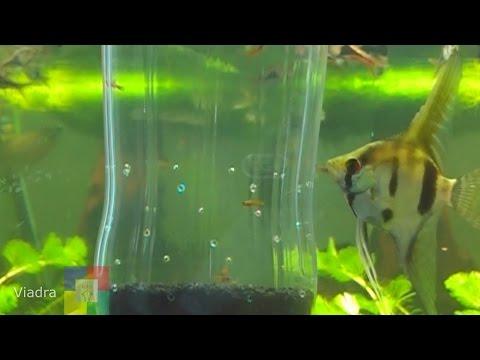 Aquarium: Aufzuchtbox für Jungtiere in wenigen schritten selber bauen