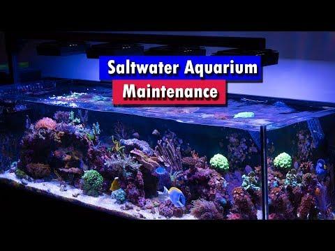 Saltwater Aquarium Maintenance_Akvárium