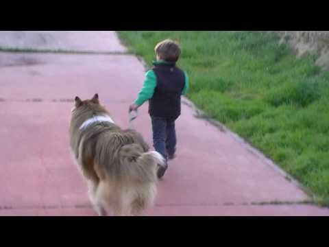 kikeadventure - Kike running with a wild wolf (видео)