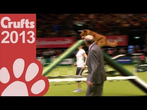 agility - Agility - International Invitation - Large - Agility Finals - Crufts 2013 Give this video the thumbs up if you enjoyed and don't forget to subscribe! Follow ...