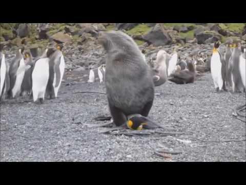 Приколы с животными!Топовая подборка приколов!ЮМОР,ПРИКОЛЫ,РАЗВЛЕЧЕНИЯ (видео)
