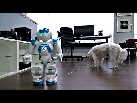 Watch a Robot Try to Feed a Dog a PopTart