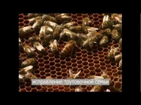 Ведение пчеловодства в современных