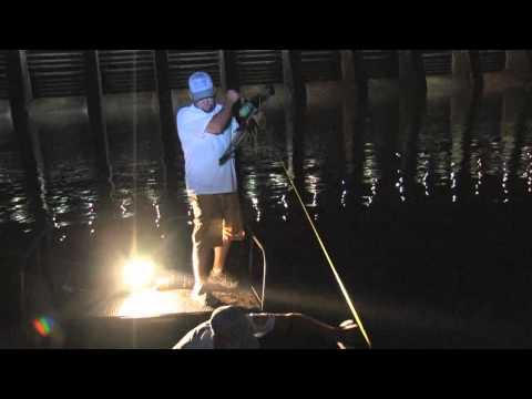 FRESH WATER SHARK! Bowfishing Bighead