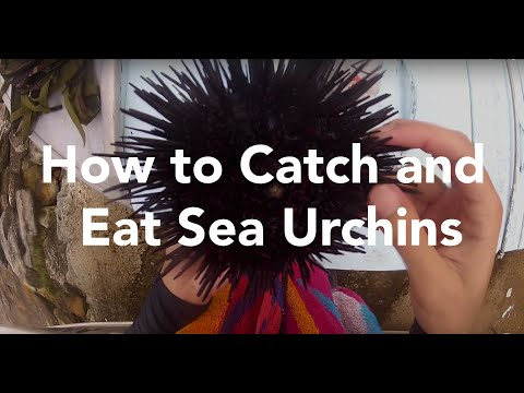 How To Catch and Eat Sea Urchins