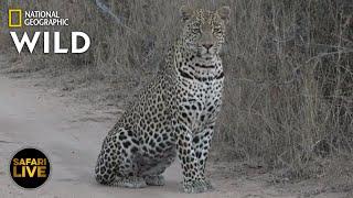 Safari Live - Day 370 | Nat Geo Wild by Nat Geo WILD