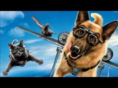 Como perros y gatos 2: La venganza de Kitty Galore