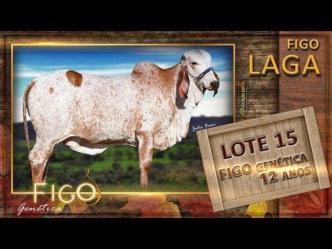 LOTE 15 - FIGO LAGA