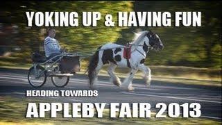 Video Appleby Horse Fair 2013 - Yoking Up & Having Fun - Gypsy Cob Vanner Horse MP3, 3GP, MP4, WEBM, AVI, FLV Oktober 2018