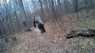 Video Explained Hidden Trail Cam Photos MP3, 3GP, MP4, WEBM, AVI, FLV September 2018