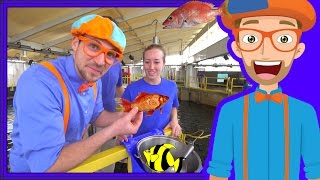 Join Blippi at the aquarium to learn about fish for children. Blippi makes educational videos for kids and in this Blippi video he will show you sea creatures at the Florida Aquarium. More videos for kids by Blippi in this 52 minute compilation. Watch more Blippi videos at https://youtube.com/Blippi?sub_confirmation=1Blippi's educational videos for kids in this video are:Blippi at the aquarium. Blippi plays at the children's museum. The theme park song. The Color Blue. and Bedtime with Blippi.