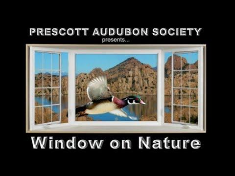 Window On Nature – 09/28/2017 – A Love Affair with Humming Birds – Karen Krebbs