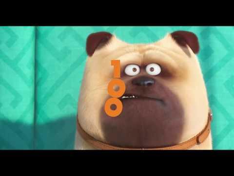 100 Anos Kinoplex contados pelos Cachorros