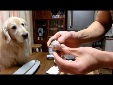 Le prepara un banquete de sushi a su perro por su cumpleaños