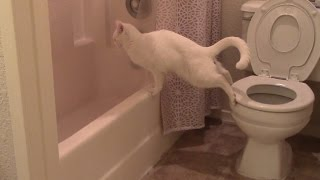 Cat Tried Out A New And Innovative Way To Poop