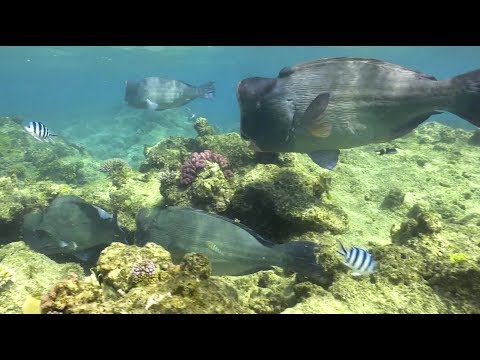 PangeaSeed on Scuba Diving & Conservation_Diving. Best of the week